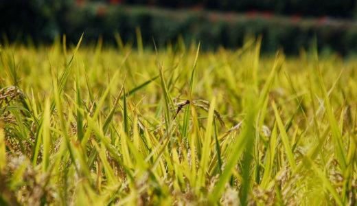 稲刈(秋分)